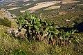 The Cactus (154512617).jpeg