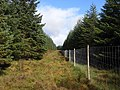 The Grun, Kielder Forest - geograph.org.uk - 1546568.jpg