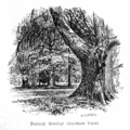 The New Forest its history and its scenery - page 195.png