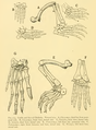 The Osteology of the Reptiles-206 fghg r drty.png