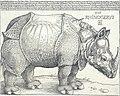 The Rhinoceros MET DT241450.jpg