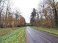 The Road through Hendale Woods - geograph.org.uk - 282851.jpg