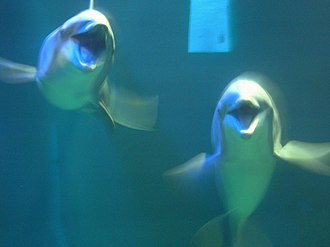 The Seas with Nemo & Friends - Image: The Seas with Nemo & Friends 045 45