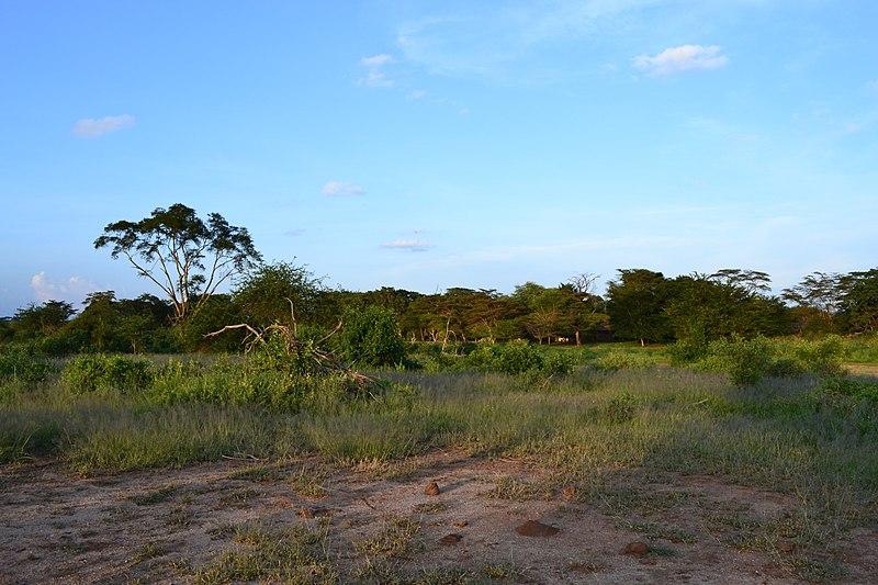 File:The Serengeti from the Voyager Ziwani Safari Camp, on the edge of the Tsavo West National Park, near Ziwani, Kenya 9.jpg