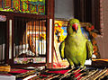 The Working Parrot (300946273).jpg