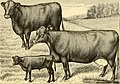 The breeds of live stock, and the principles of heredity (1887) (14778219541).jpg