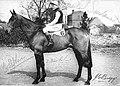 The horse Oxo and jockey Michael Scudamore.jpg