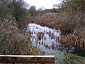 Thurlby Fen Slipe Nature Reserve - geograph.org.uk - 302825.jpg