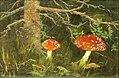 Toadstools-under-the-tree.jpg!PinterestLarge.jpg