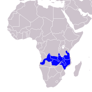Pale-billed hornbill - Image: Tockus pallidirostris Distribution