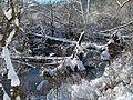 Traces Of Beaver - panoramio.jpg