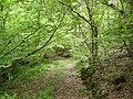 Track Burn Barrow Wood - geograph.org.uk - 178138.jpg