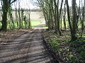Track leading from house in Gorsely Wood. - geograph.org.uk - 323544.jpg