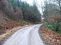 Track through Auchenfraoch Wood. - geograph.org.uk - 105140.jpg