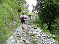 Trail to Triund (16098705148).jpg