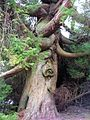 Tree - panoramio (26).jpg