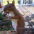 Tree Squirrel with Nut.jpg