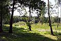 Trees - panoramio (63).jpg