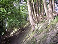 Trees clinging to bank near Coulston - geograph.org.uk - 414381.jpg