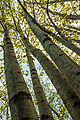 Treetops (15242635083).jpg
