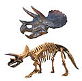 Triceratops-0060-skull-and-skeleton.jpg