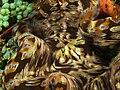 Tridacna squamosa (Fluted Giant clam).jpg