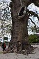 Tristeno , Wies en de reuzenboom - panoramio.jpg