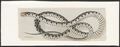 Tropidonotus vittatus - 1753-1834 - Print - Iconographia Zoologica - Special Collections University of Amsterdam - UBA01 IZA1000190.tif