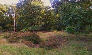 Lesnes Abbey Woods - The surviving late prehistoric tumuli, or burial mound, atop the hill in the woods. It has been dug into and is heavily damaged.