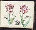Twee tulpen met slak, nachtvlinder en twee insecten, RP-T-1950-266-41-2.jpg