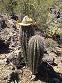 Twin Saguaros2.jpg