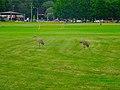 Two Sandhill Cranes - panoramio (1).jpg