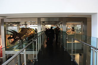 Ulster Museum - New Triceratops exhibit on re-opening, 22 October 2009