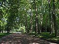 Une allée - Parc de la Tête d'Or (Lyon).JPG