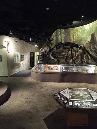 University of Nebraska State Museum - Mesozoic Gallery