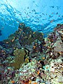 Up the reef with lots of small fish (6159021814).jpg