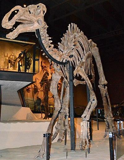 Utah Gryposaurus.jpg
