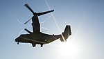 VMM-263 Conducts Fast-Rope Training With MARSOC 150623-M-SW506-770.jpg