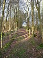 Vanguard Way, Kiln Wood - geograph.org.uk - 352728.jpg