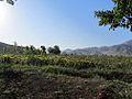 View of farm Qzqlh.jpg