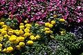 Villa Taranto - Blumenbeet 2.jpg