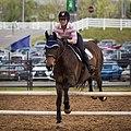 Virginia Horse Festival 2016-43 (25648976413).jpg