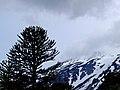 Volcan Lanin nevado.jpg