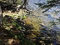 Vylet k Cernemu jezeru Sumava - 9.srpna 2010 150.JPG