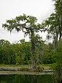 Wakulla-springs 2009-05-04T19 01 51.jpg