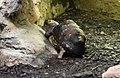 Waldschildkröte.jpg