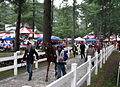 Walking the horses from the Track, Opening Day in the Rain Saratoga Racetrack NY 8385 (4854186158).jpg