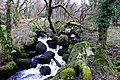 Walla Brook Dartmoor - geograph.org.uk - 1065797.jpg