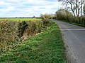 Watchwell Drove, near Butleigh Wootton - geograph.org.uk - 732519.jpg