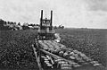 Water Hyacinths Block Steamboat 1920.jpg